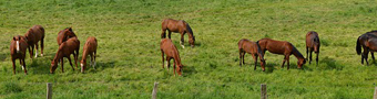 gallery/horse-1410749_640